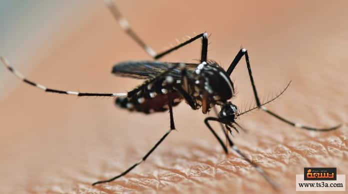 مرض الملاريا