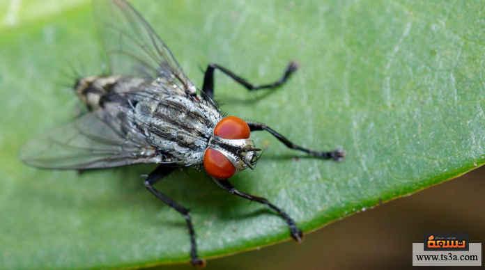 التخلص من ذباب الفاكهة النظافة والتعامل بطريقة صحية من أهم طرق التخلص من ذباب الفاكهة