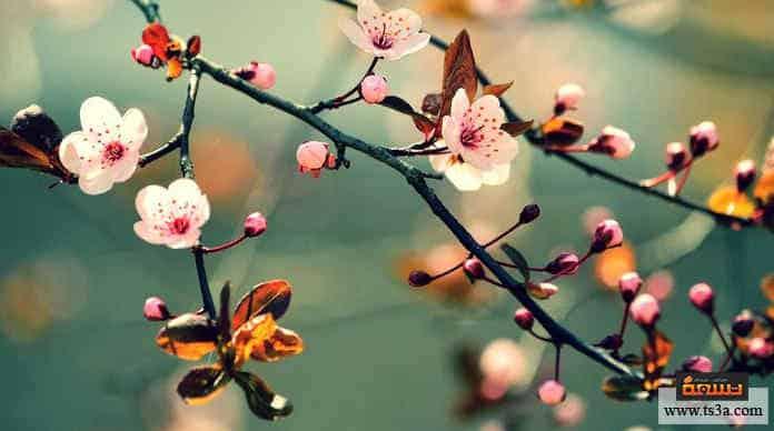 شهر آذار بداية فصل الربيع