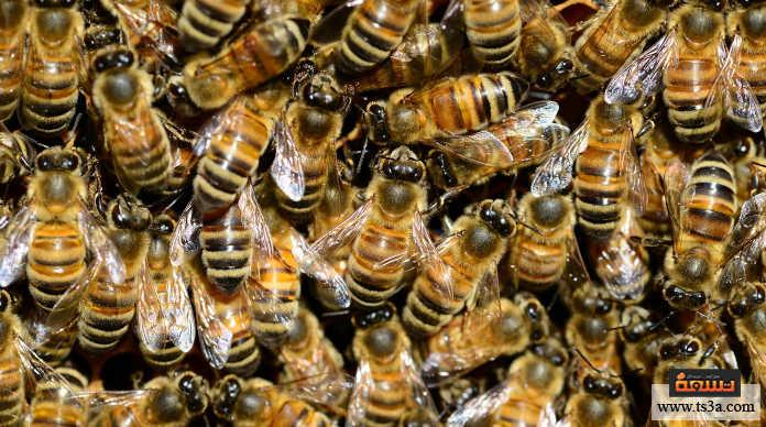 إنقاذ النحل ابحث عبر الإنترنت