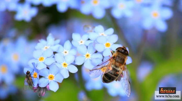 إنقاذ النحل زرع الزهور المناسبة لها