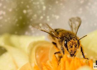 إنقاذ النحل