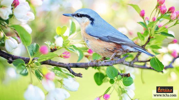 استقبال الربيع الاستعداد النفسي