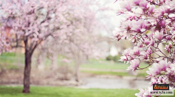 استقبال الربيع التخطيط في الرحلات والانطلاق