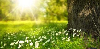 استقبال الربيع
