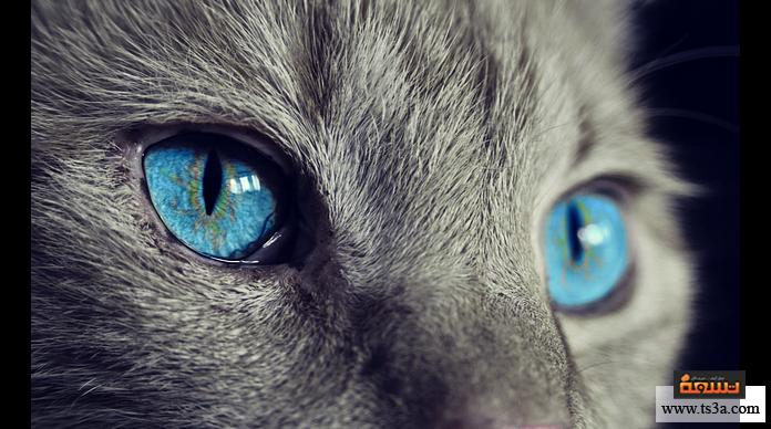الحقائق المجنونة القطط يمكن أن تنقل الحساسية لبعض الناس أو تنتقل إليها