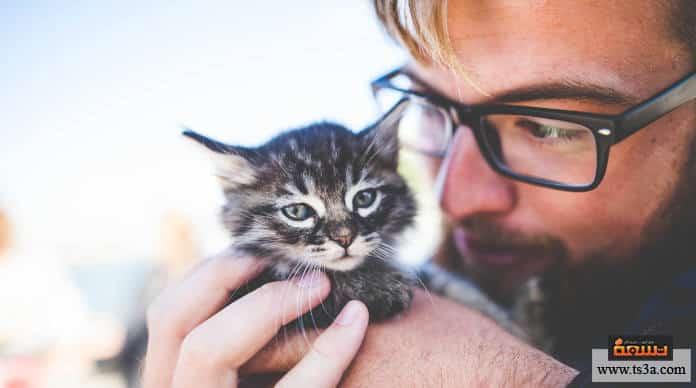 الاتصال بجمعيات رعاية الحيوانات