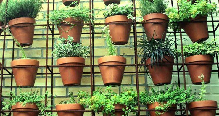 كيفية زراعة الخضروات الورقية
