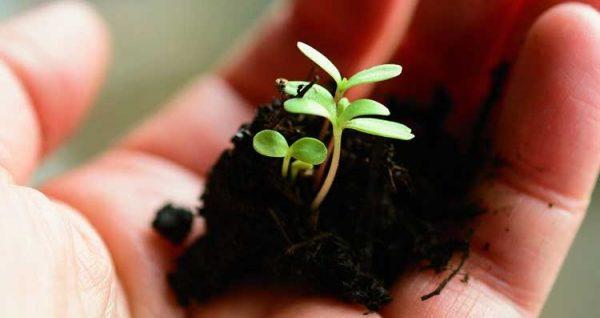 تربة مناسبة للزراعة